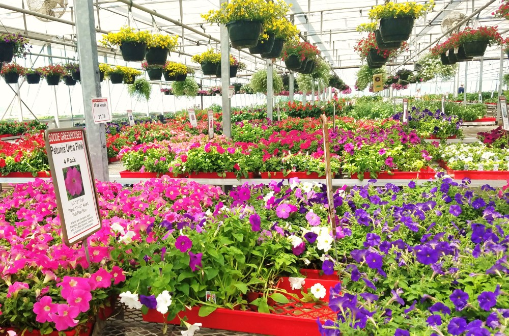 Top Ten Places to buy Flowers/Greenhouses in the Des Moines area ...